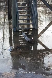 tulvavesi