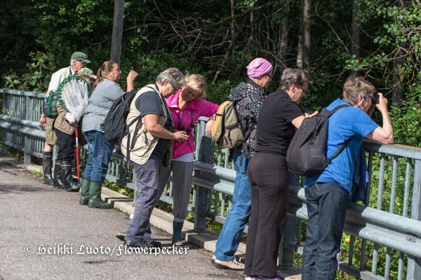 ryhmä sillalla